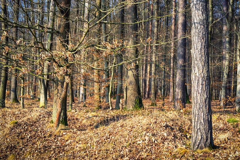 View into the deep forest. View into the deep German forest stock photos