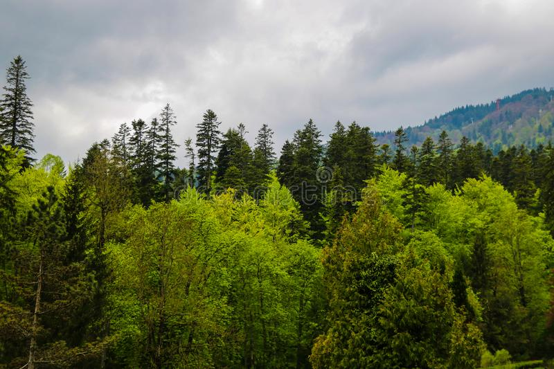 View of the dense, moist, dark forests in Romania on a gloomy, not sunny day. Strange forest with terrible and scary stories,. Witches and ghosts royalty free stock photo
