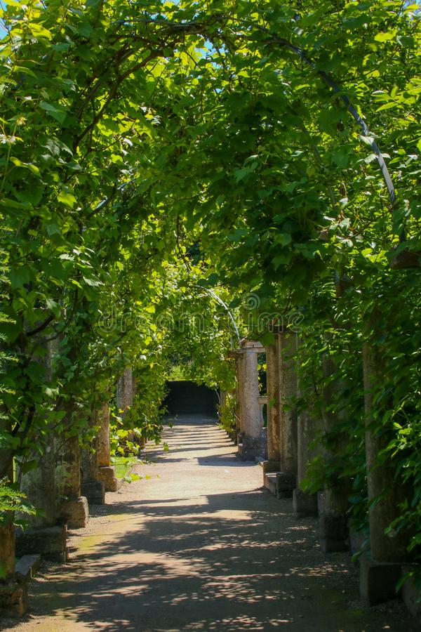 The view down the path through a living arch royalty free stock photography