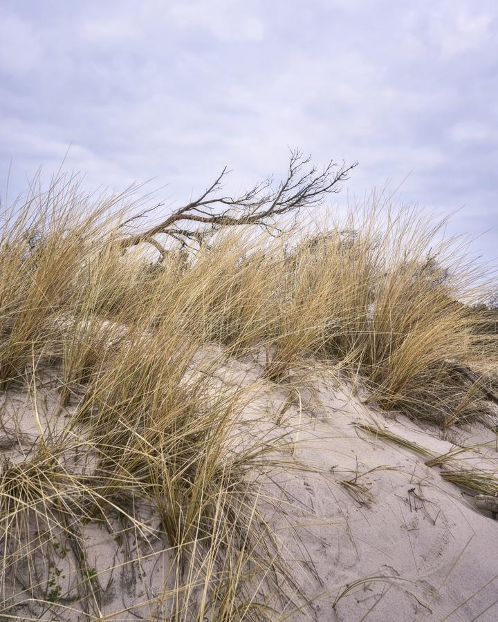 View of the dune with dune grass and tree stock image
