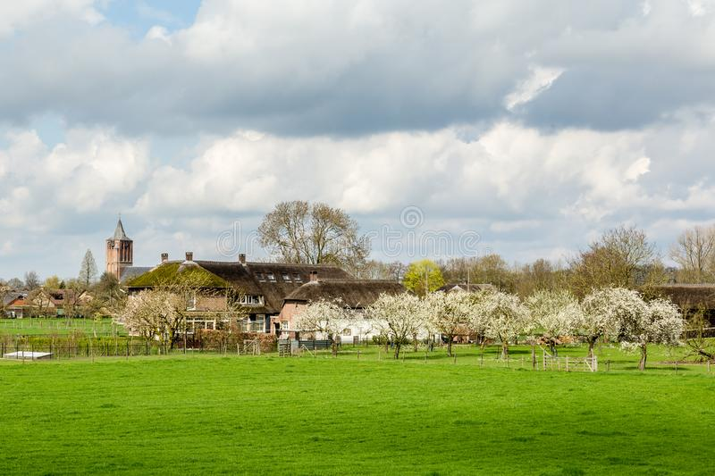 View from the on Lienden, Holland. View from the in the Betuwe fruit region in the Netherlands stock photography