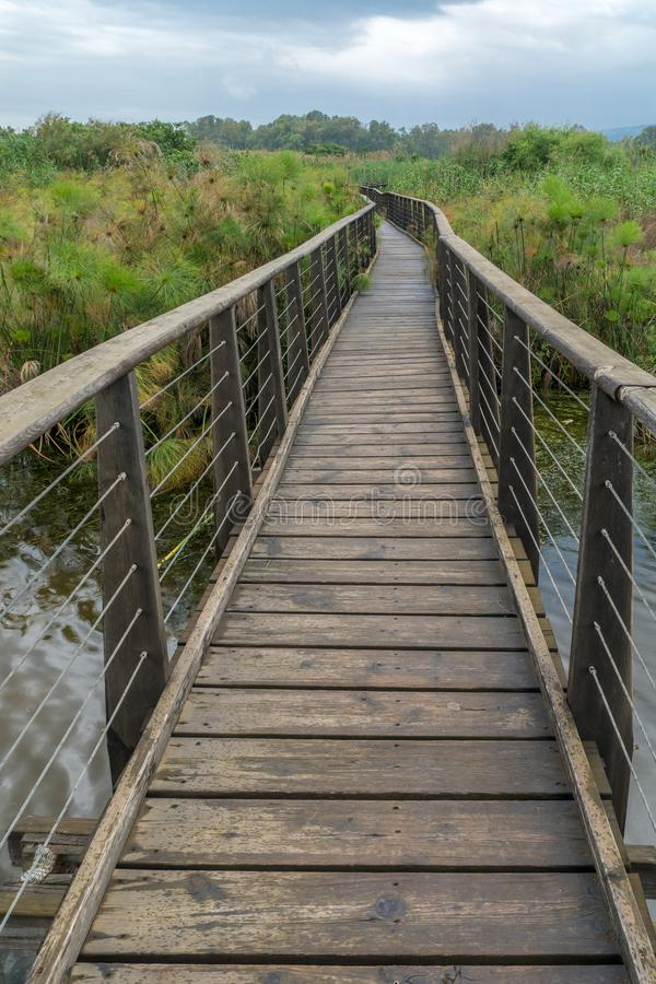 Elevated footpath in the Hula Nature Reserve royalty free stock photo