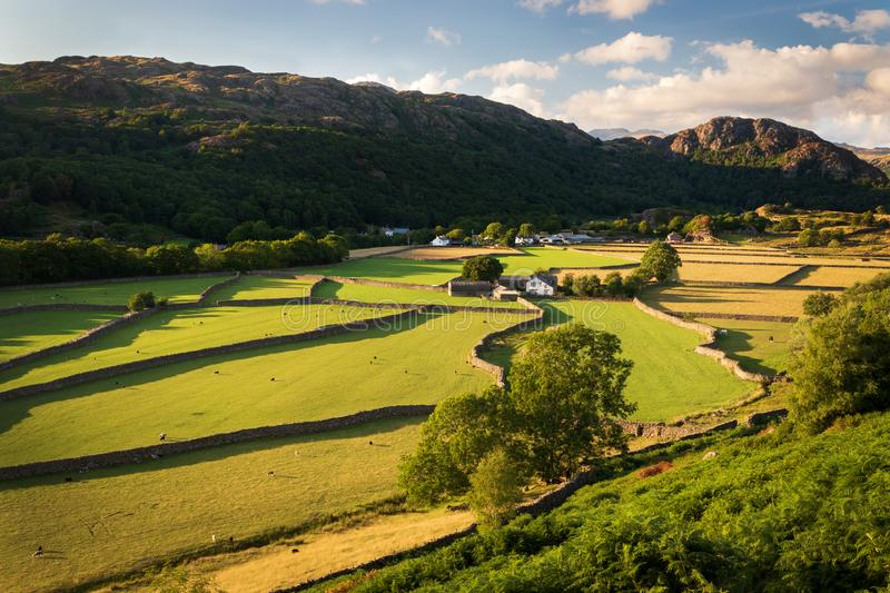 View of English rural countryside on beautiful sunny evening, sh. Eep grazing on lush green pastures in the Duddon Valley in the Lake District royalty free stock image