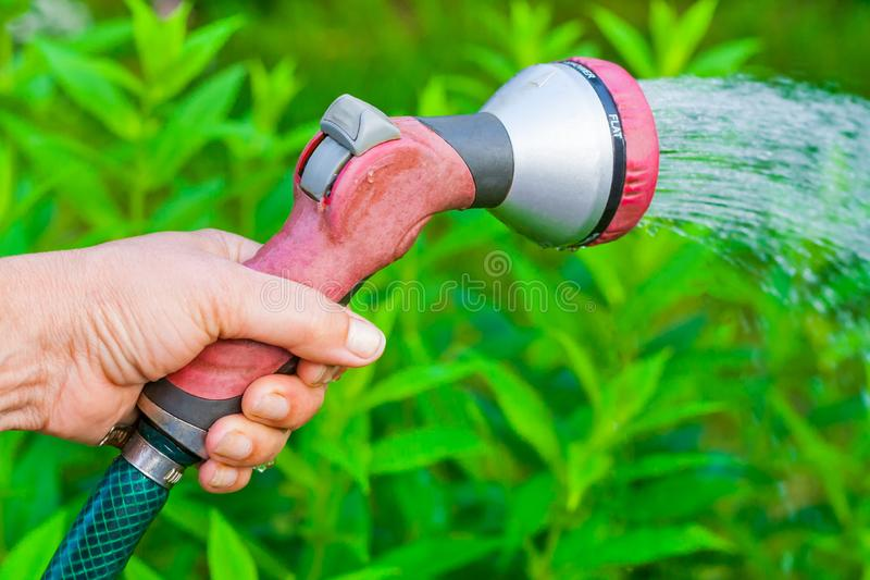View on a female hand with a sprinkler watering a garden royalty free stock image