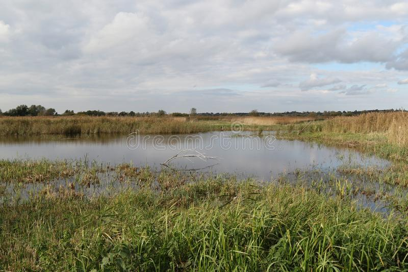 View from Fen Hide at Strumpshaw Fen. Strumpshaw Fen is a RSPB bird reserve on the River Yare near Norwich, Norfolk stock images