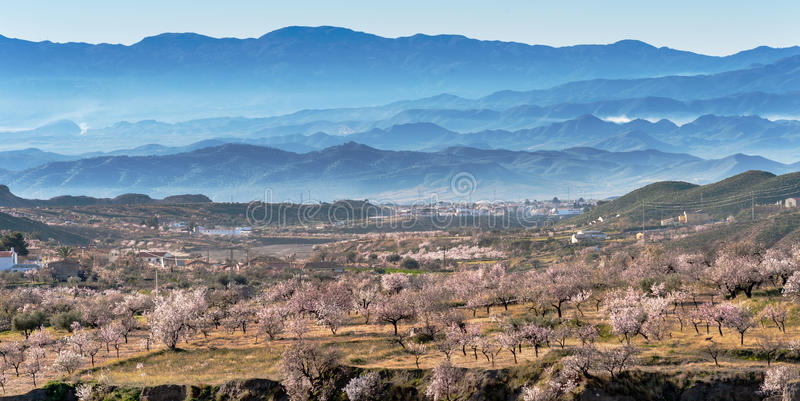 View of a Field of Almond Trees stock photos
