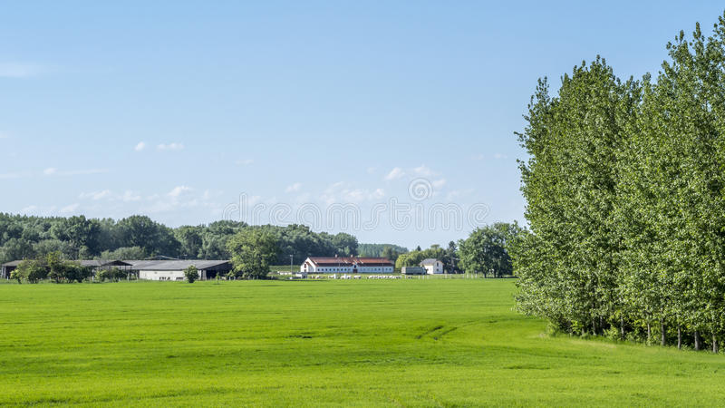 View of a field of grain with a farm in the background royalty free stock images