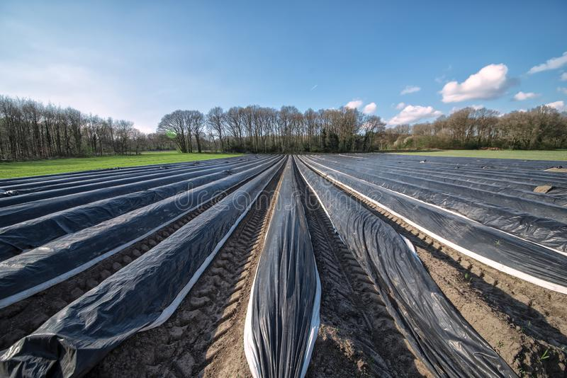 View of a field in the open nature where asparagus is grown. In the background various types of trees against a bright blue sky. View of a field in the open royalty free stock photography