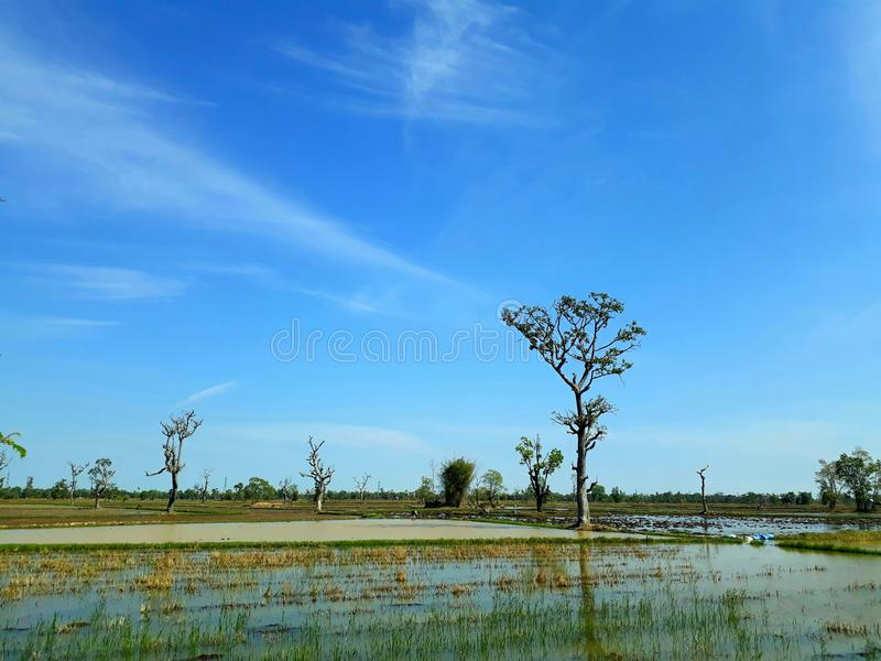 View of field in thailand royalty free stock images