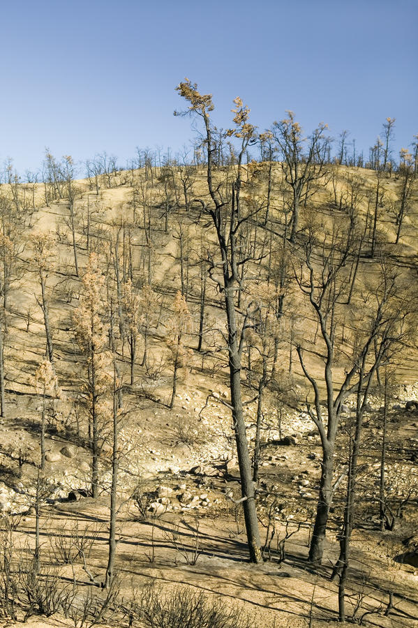 View of fire damage from Day Fire, 2006, along Lockwood Valley Road (near Pine Mnt. and Frazier Park) in Las Padres National Fores. T, Ventura County, CA stock photography