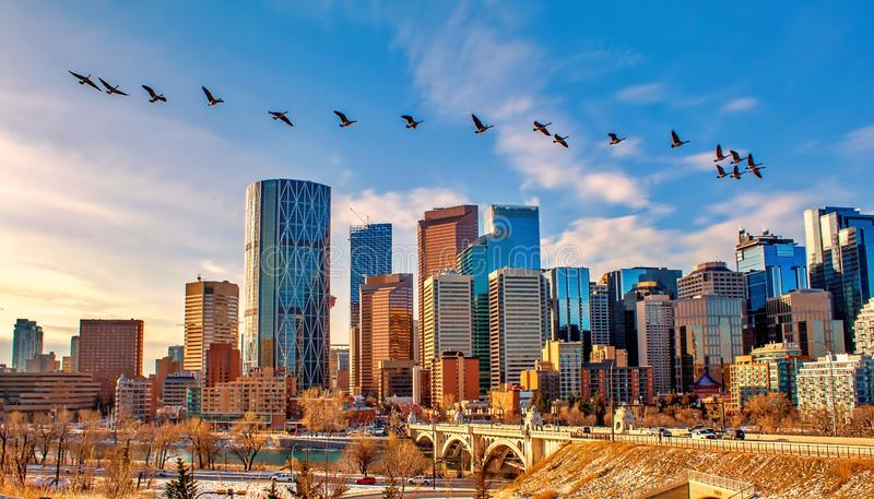 Geese Flying Over Calgary. A view of a flock of geese flying over the city of Calgary stock photography