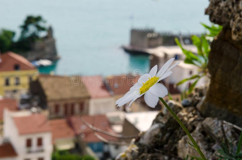 View of Nafpaktos, greece. View of a flower and historic buildings in the port of Nafpaktos, Greece stock photos