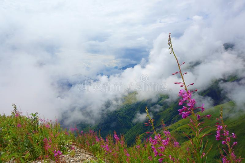 View with flowers from Gorvashi pass on a hiking trail covered in clouds and leading from Ushguli to Chvelpi, Caucasus mountains,. View with flowers from royalty free stock photo