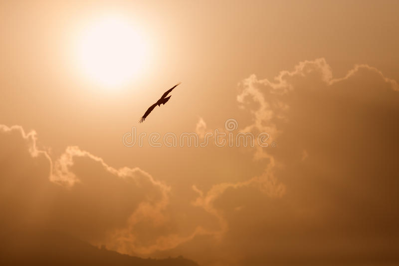 View of a flying eagle with wings open and sun and clouds in background. View of a flying eagle with wings open and sun and clouds in background royalty free stock photo