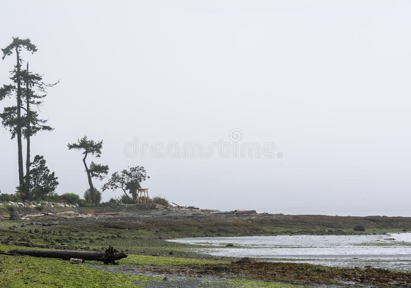 Foggy Pacific North West stock photography