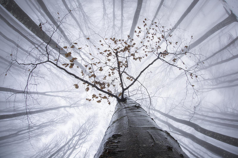 View of forest from below in winter time with fog stock image