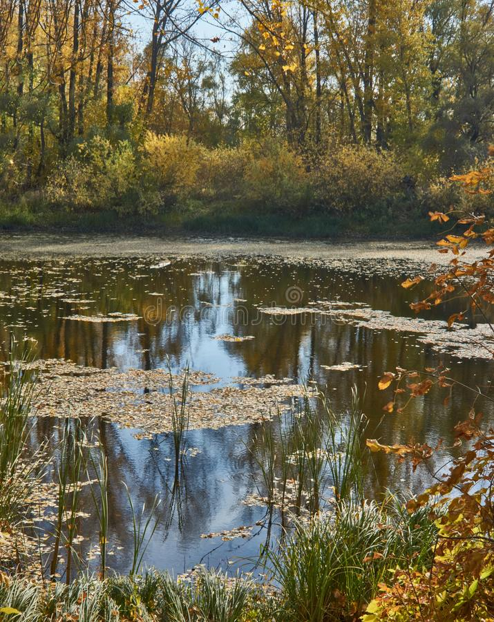 View of the forest lake with  the autumn forest stock image