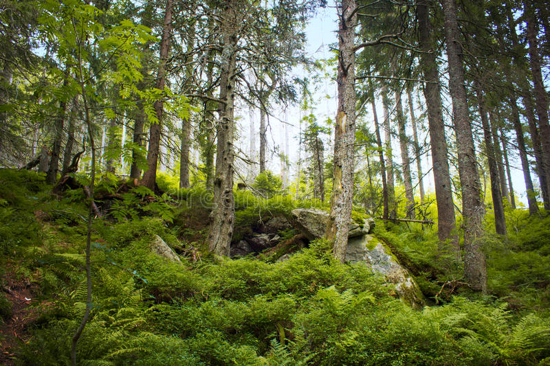 View of the forest stock photography