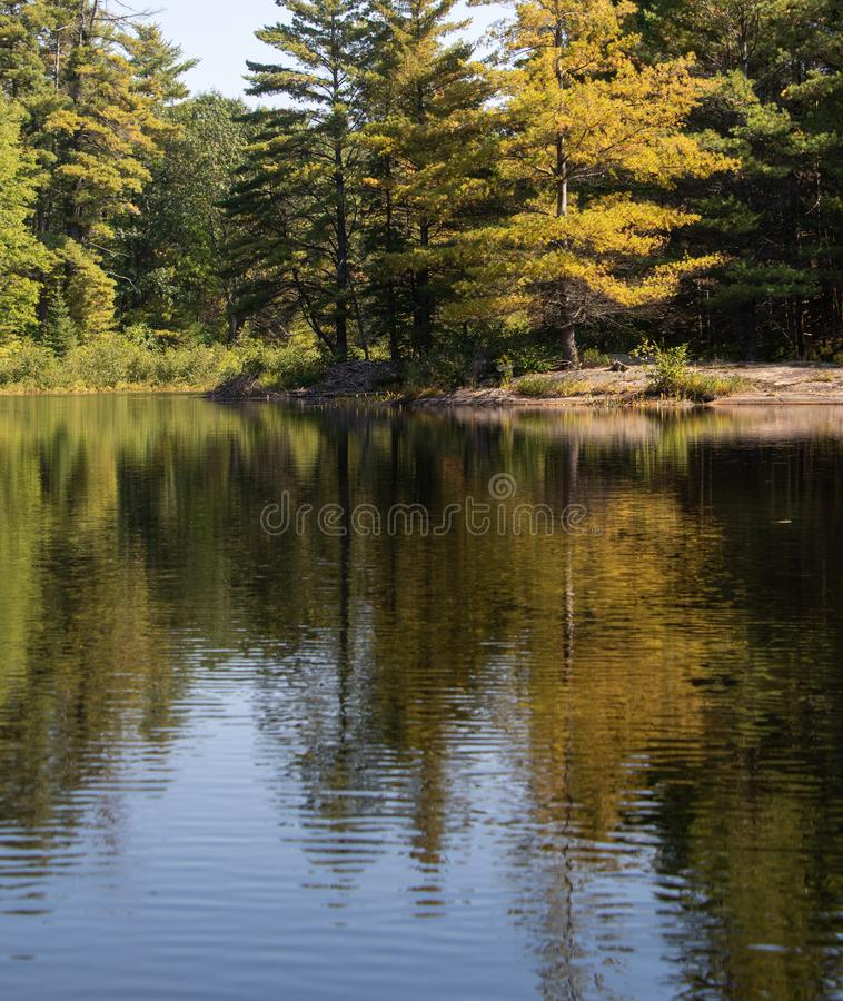 View of forest and reflections from the kayak on the lake in autumn royalty free stock photos