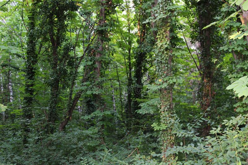 View of the forest rich vegetation, branches and leaves. Nature green background stock images
