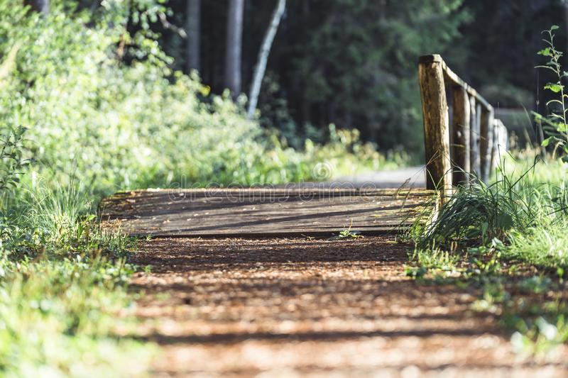 View of the Forest Road, heading deeper in the Woods on the Sunny Summer Day, Partly Blurred Image with Free Space for Text stock photos