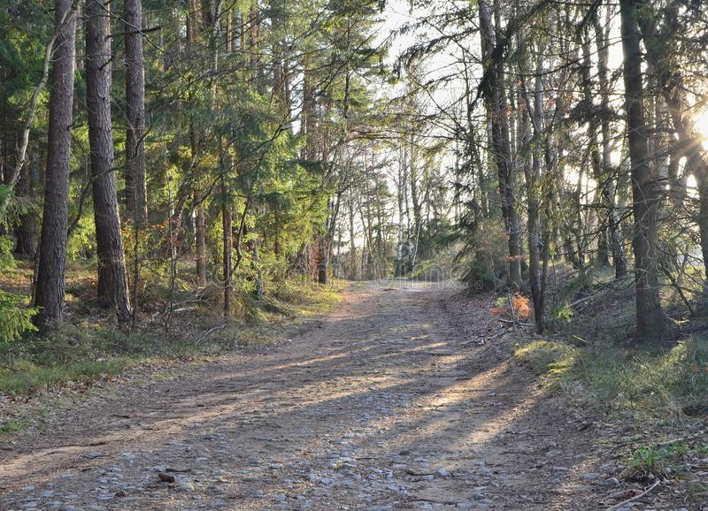 View of forest road, south Bohemia. Czech Republic stock photo