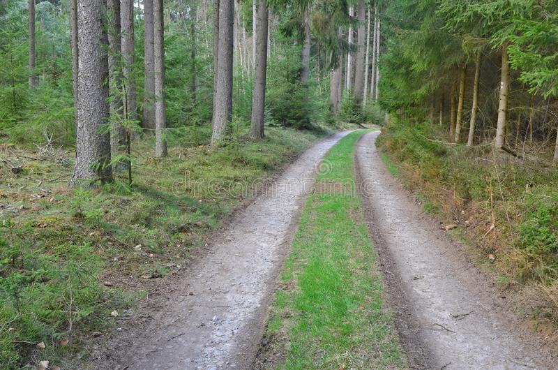View of forest road, south Bohemia. Czech Republic stock image