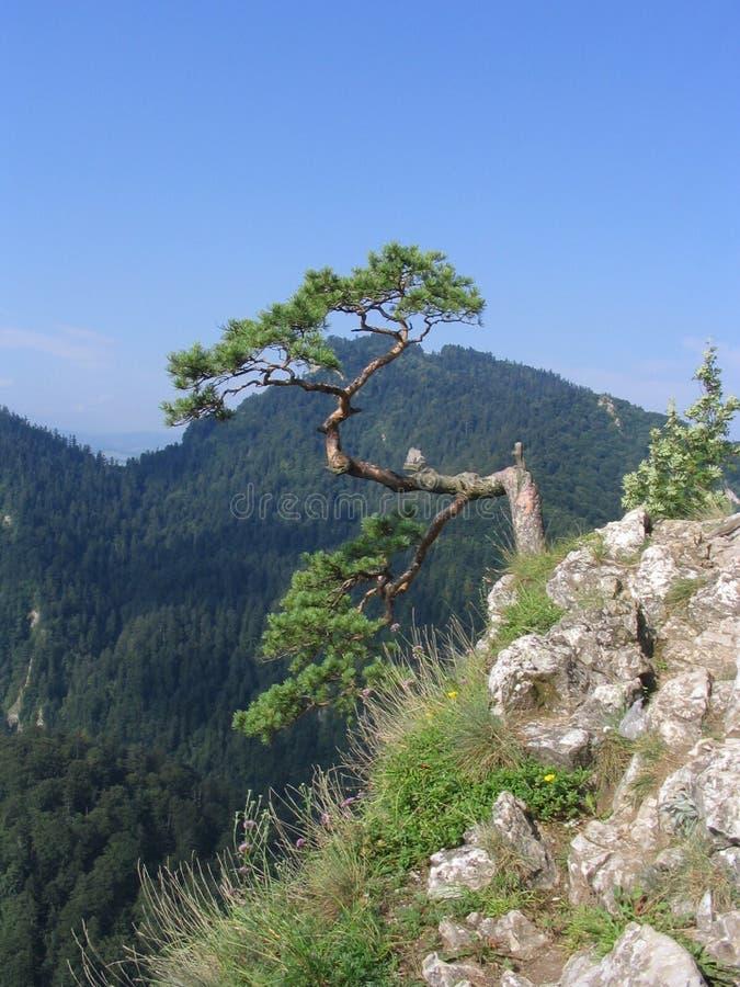 View form the Sokolica Mountain stock image