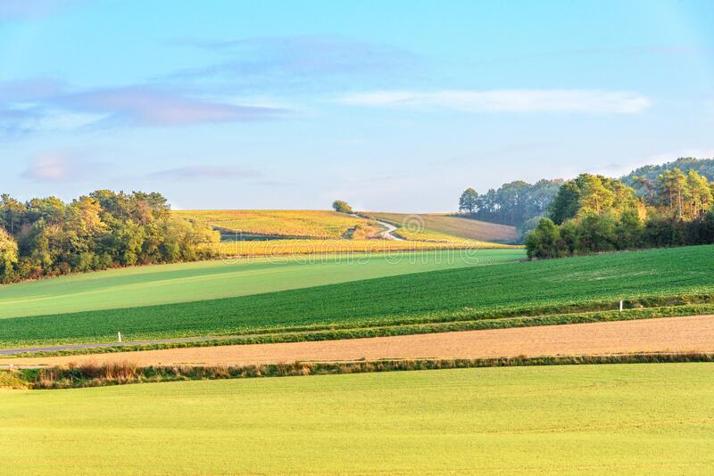 View on French vineyards in Champagne area during Autumn stock photography