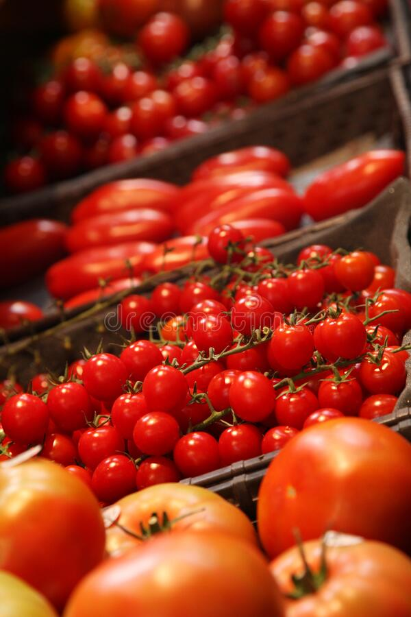 tomato shapes stock photo