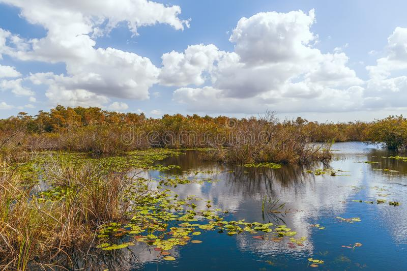 View of freshwater marsh from Anhinga Trail boardwalk in Everglades National Park.Florida.USA royalty free stock photo