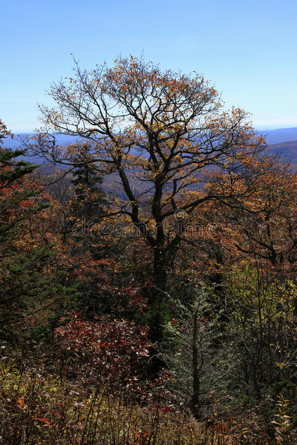 Free View From Fetterbush Overlook In North Carolina Royalty Free Stock Images - 46110099