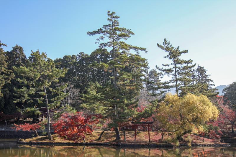 view of garden in autumn in japan stock photo