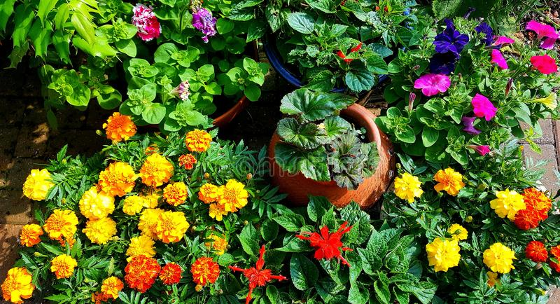 Patio summer bedding plants royalty free stock photography