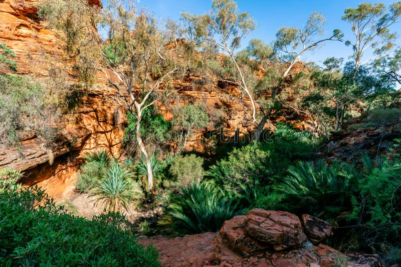 View of the garden of eden with lot of green trees in arid Kings Canyon in outback Australia. View of the garden of eden with lot of green trees in arid Kings royalty free stock images