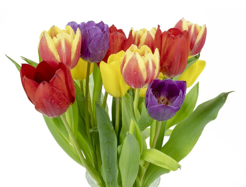 Glass vase and Tulips. View of a glass vase of Tulips on a white background stock photos