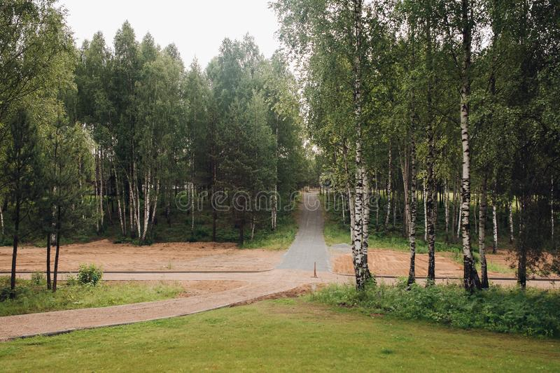 View of green empty park with birches during springtime royalty free stock photography