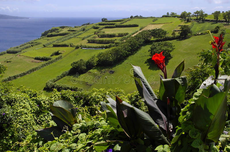The view of green Faial island. Azores. royalty free stock images