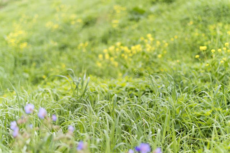 View of a green meadow with flowering plants and flowers. royalty free stock images