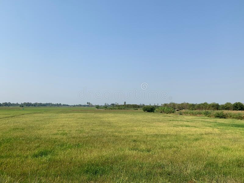 View of a green meadow under the blue sky as beautiful natural background royalty free stock photos