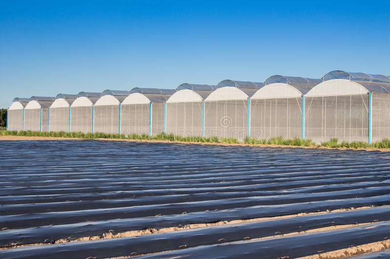 View for greenhouse with blue sky stock images
