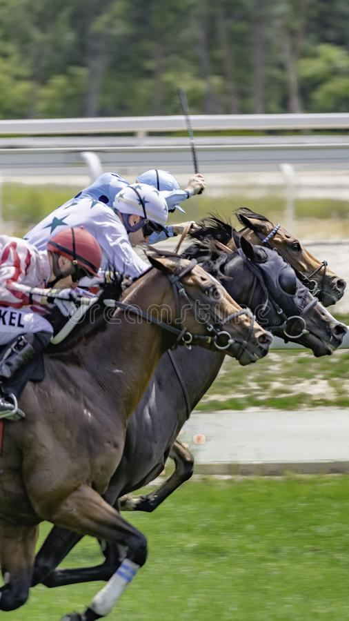 VIEW OF GROUP OF HORSES TROUTING IN A RACE stock image