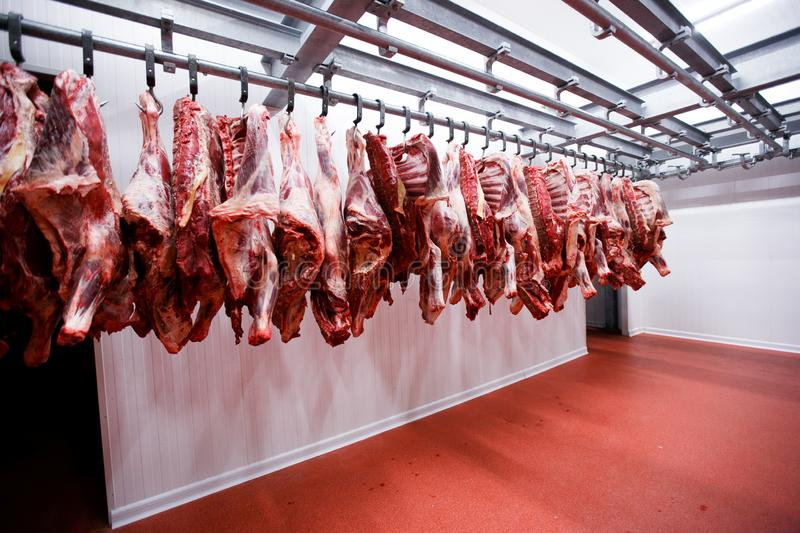 View of a half cow chunks fresh hung and arranged in a row in a large fridge in the fridge meat factory. stock photos