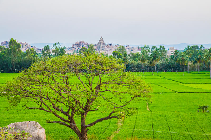 View of Hampi with rice fields, India royalty free stock images