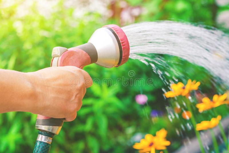 View on a hand with sprinkler, watering a yellow flowers in the garden on a background of green plants in bokeh, stock images