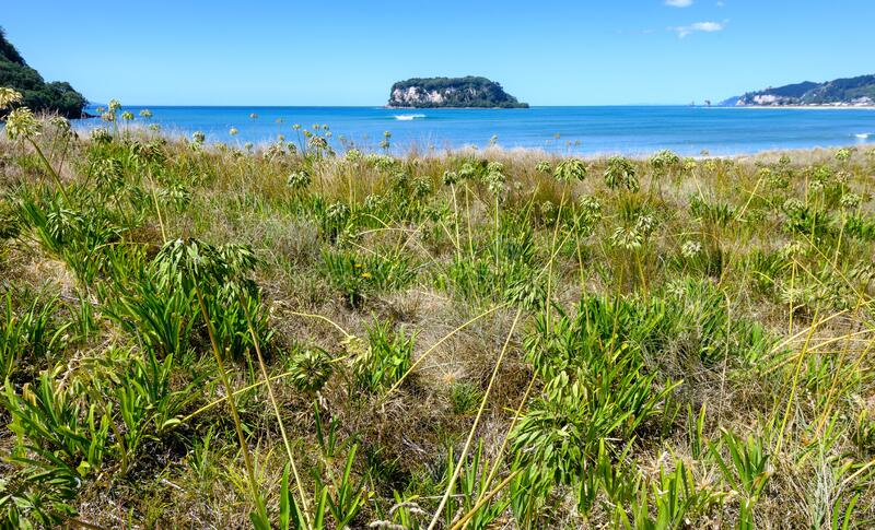 A view of Hauturu island from whangamata beach on the north island of new Zealand stock image