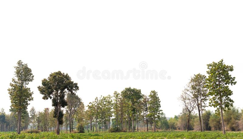View of a High definition Treeline  royalty free stock images
