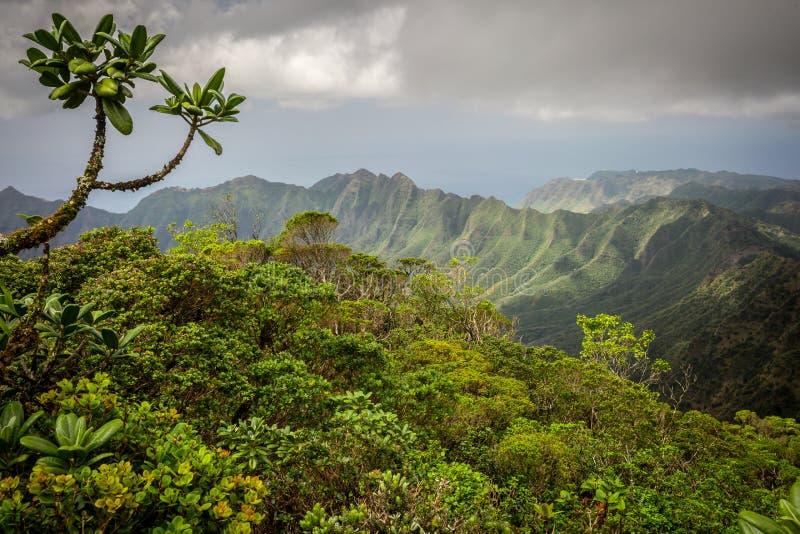 Lush Jungle Mountains Of Hawaii Stock Image Image Of