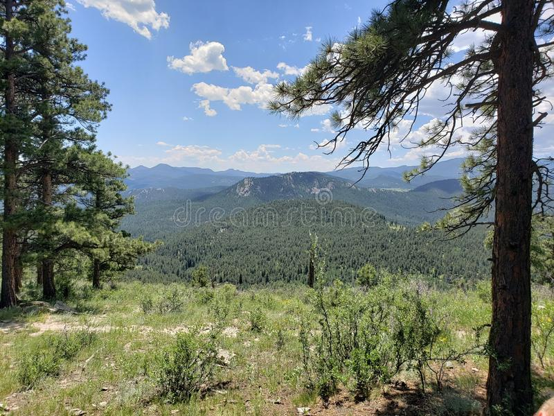 View from Hiking in the Colorado Rocky mountains. Woodland, evergreen, tree, bark, background, pine, juniper, outdoor, natural, nature, cypress, berry, seed royalty free stock photo