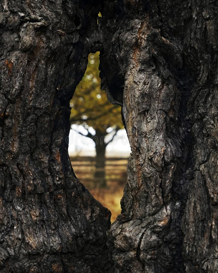 View through a hole in a tree. stock photography